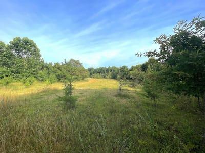 Kelly Rd - 382 acres - Vinton County
