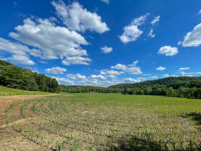 Elkhorn Rd. - 386 acres - Jefferson County