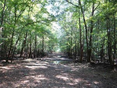 Black Lake Bayou Tract, Bienville Parish, 417 Acres +/-