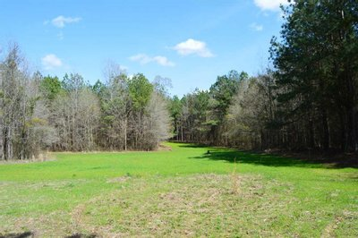 723 Acres Timber and Recreational Land for Sale, Montgomery Co., Mississippi