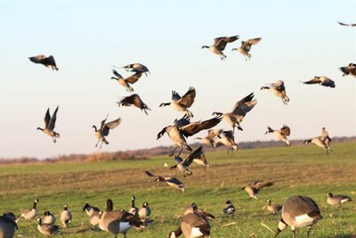 Mallard Mecca Farms-465 acres of Waterfowl Paradise and Income Generating-Turn Key and Ready to GO!