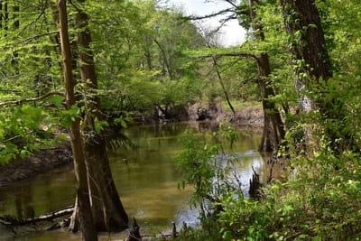 Terre Rouge Creek