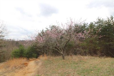 CR 55 - 329 acres - Lawrence County